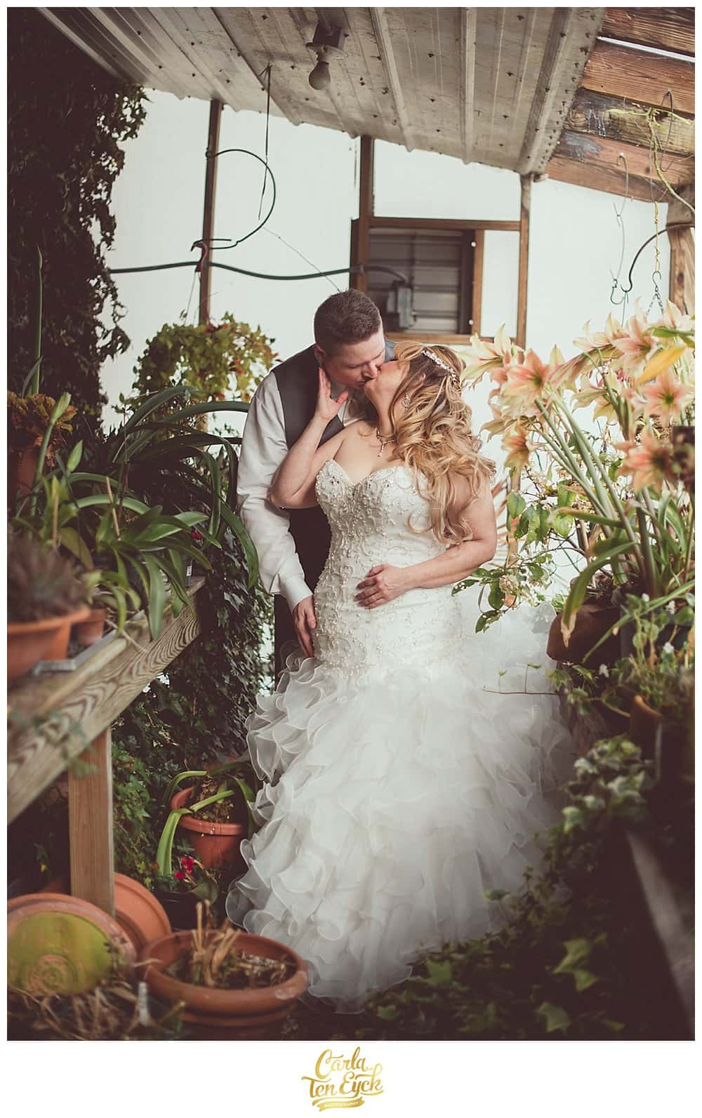 Bride and groom kiss in the greenhouse after their vow renewal at Hopkins Vineyard CT