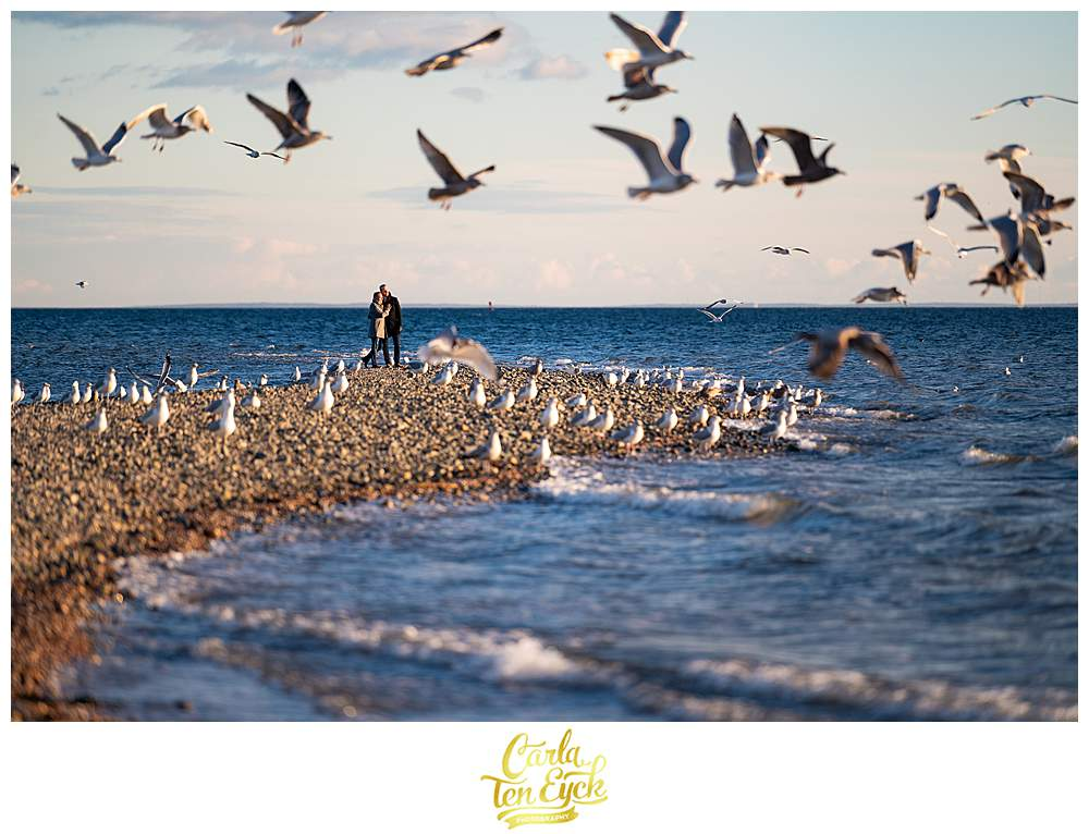 Two grooms are surrounded by seagulls during their winter engagement session at Silver Sands beach in Milford CT